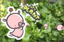 Dinplant พืช ผัก ต้นไม้
